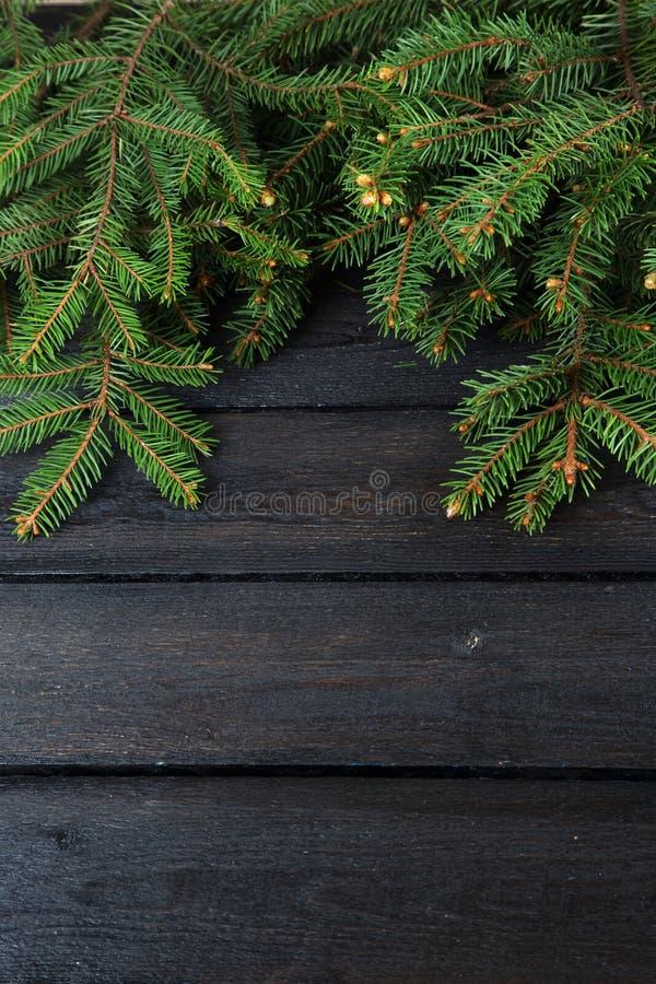 Green fir branches stock photos