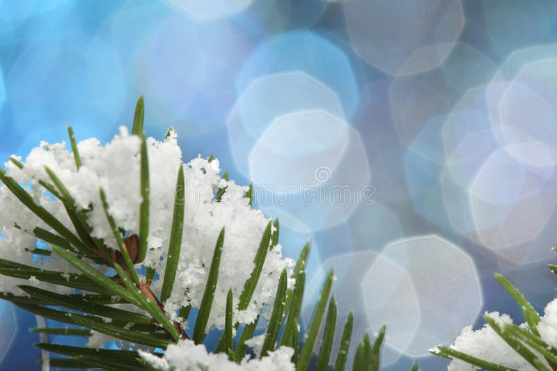 Green fir in snow stock images
