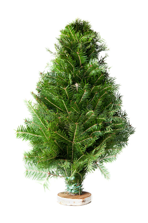 Download Green fir-tree stock image. Image of xmas, spruce, pine - 23440433