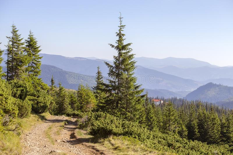 Green fir trees and a dirt road against the background of the Carpathian mountains. Ukraine royalty free stock image
