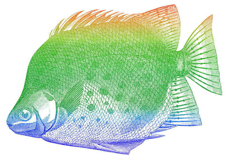 Green Fish Royalty Free Stock Images