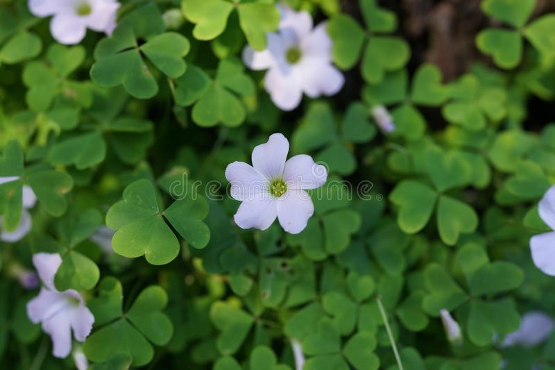 Green, Flora, Plant, Flower royalty free stock images