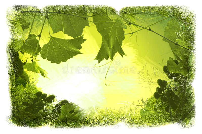 Green Floral backgrounds stock illustration