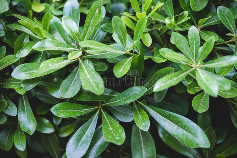 Green floral pattern of leaves. Natural background from above. Top view. stock photo
