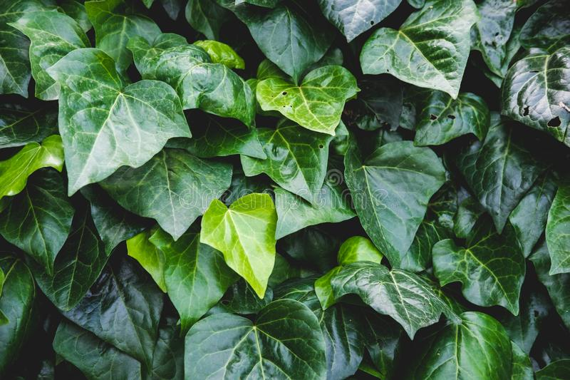 Green floral pattern of leaves. Natural background from above. Top view. stock photos