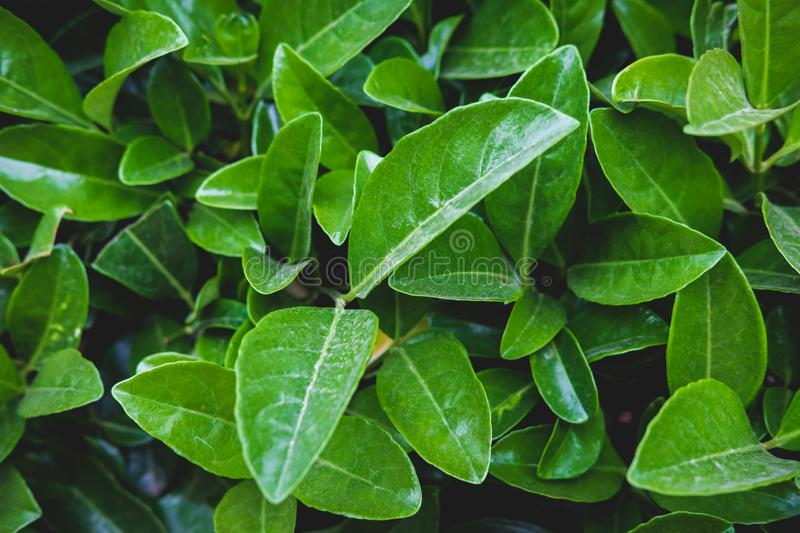 Green floral pattern of leaves. Natural background from above. Top view. stock images