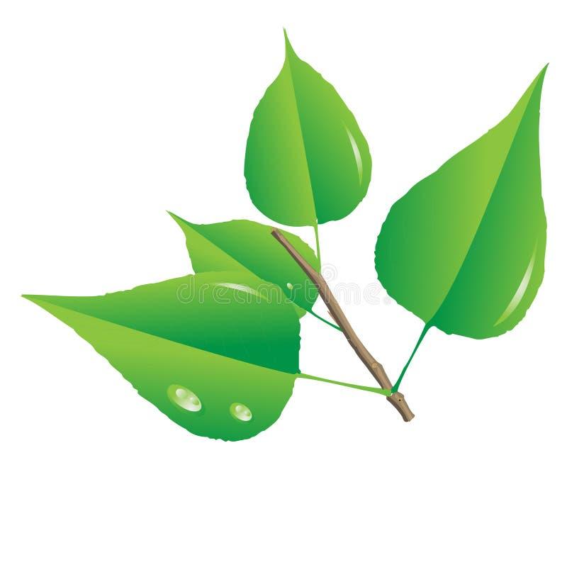Green flower royalty free illustration
