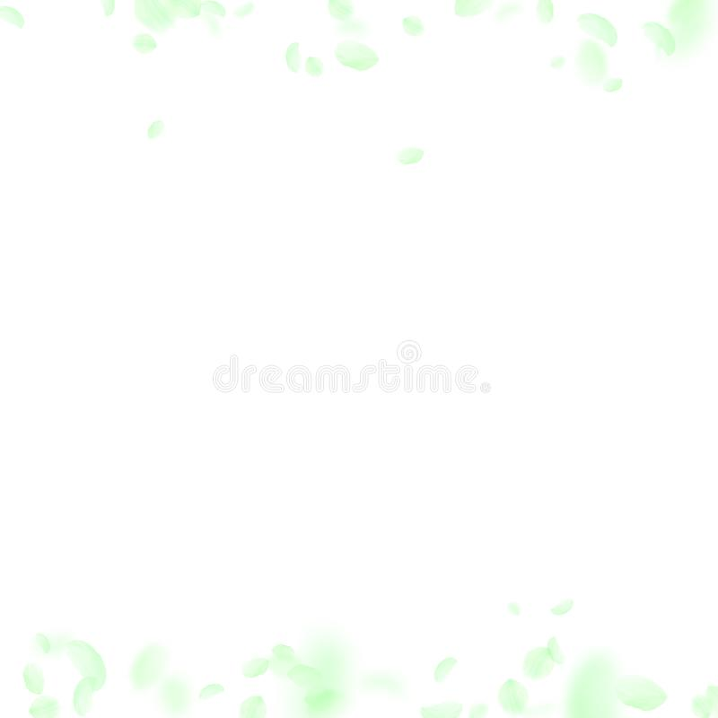Green flower petals falling down. Cute romantic flowers borders. Flying petal on white square backgr royalty free illustration