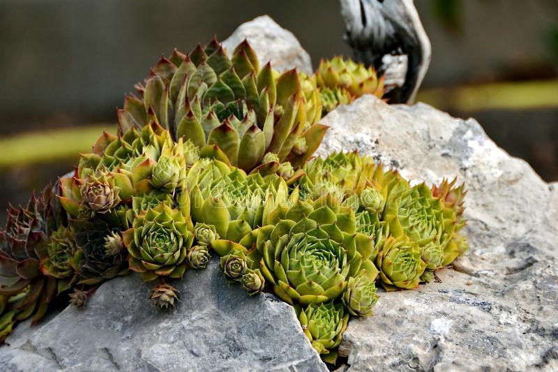 Green Flower on Rock royalty free stock photos