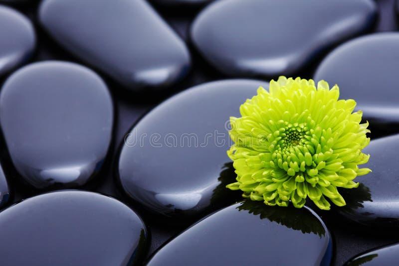 Green flower still life. Green flower detail still-life spa stone stock photo