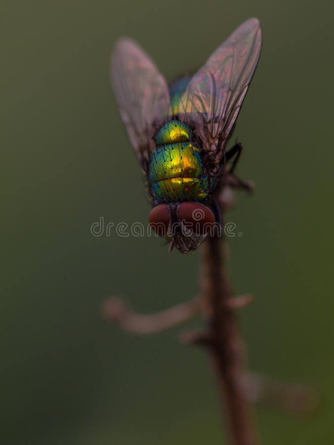 Download The Green Fly Is On Top Stock Photo - Image: 83700306
