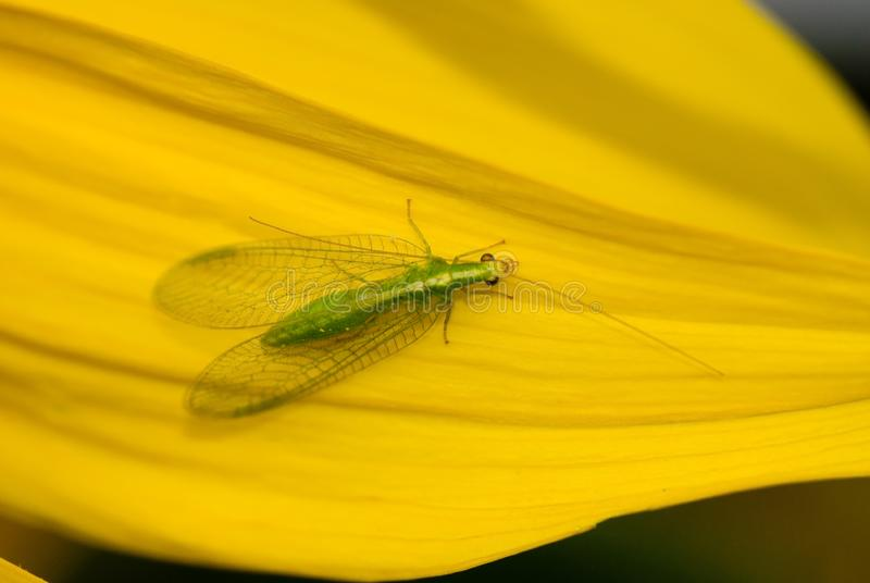 Green flying insect stock image. Image of close, insects ...