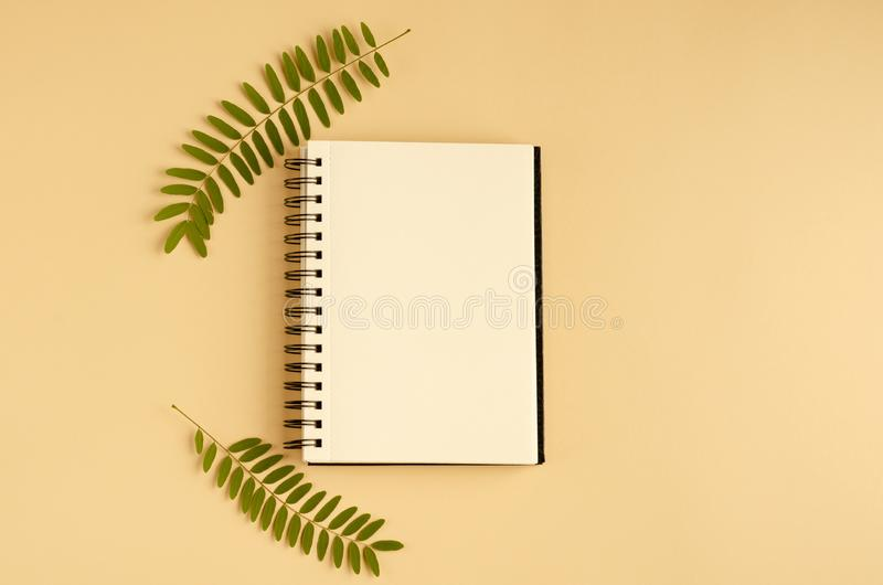 Green foliage, acacia branch and note pad composition on beige background. Flat lay, layout and tabletop mockup with copy space, above, flatlay, view, desk stock photo