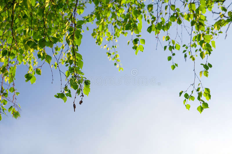 Download Green Foliage Branch And Blue Sky Stock Image - Image of leaves, botany: 5410823