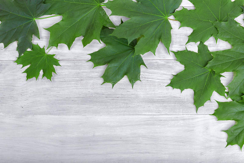 Green foliage on a gray wooden background. Leaf on a table. Grape leaves. Amazing gardening. Botanical scene. stock photography