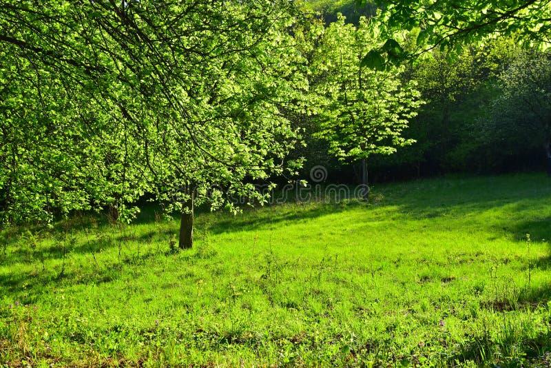 Green foliage nature tree royalty free stock photography