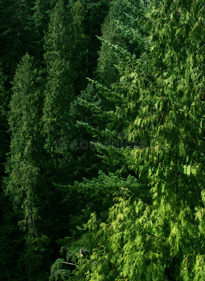Download Green forest stock image. Image of bridge, layer, forestry - 116741