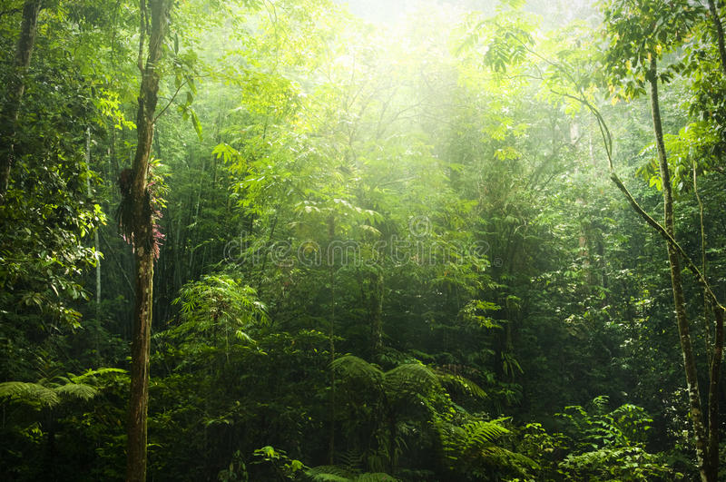 Download Green forest stock photo. Image of adventure, background - 12111770