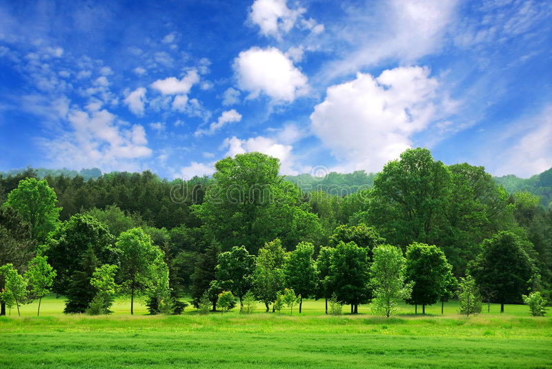 Download Green Forest Royalty Free Stock Photos - Image: 2131948