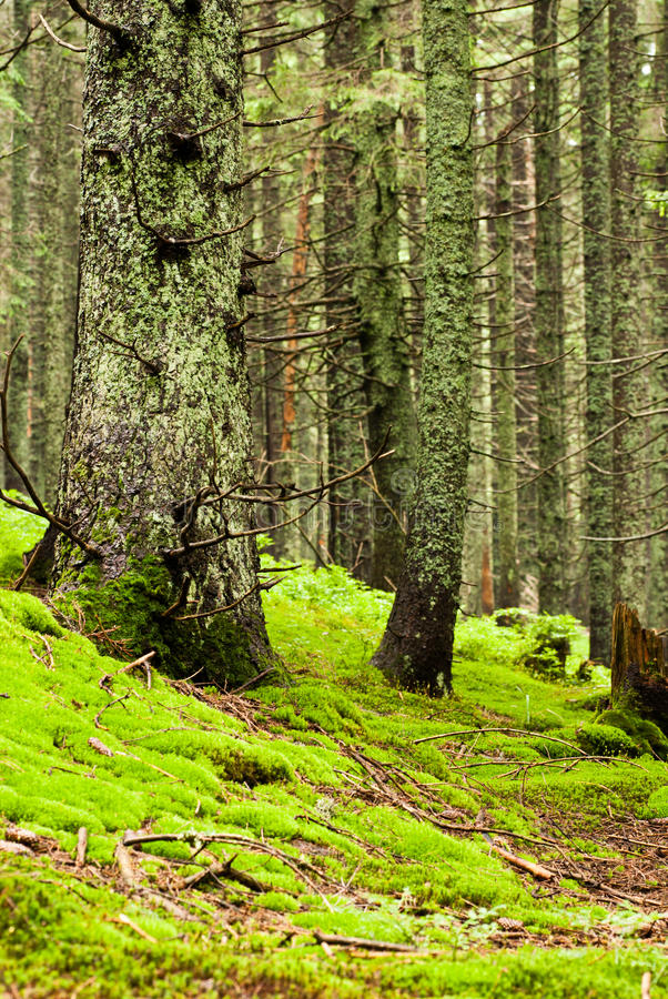Download Green forest stock image. Image of moss, plant, leafy - 23866823
