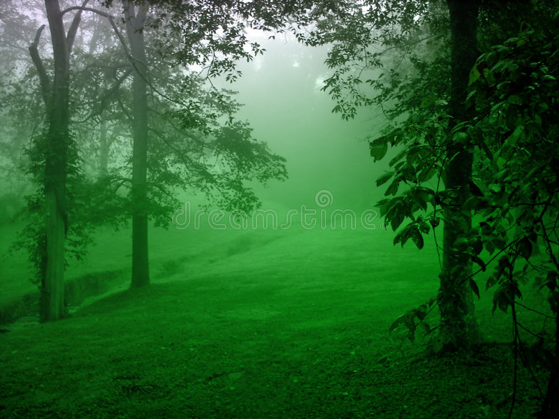 Download Green Forest stock image. Image of green, forest, trip - 250457