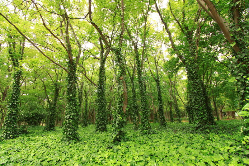 Download Green forest stock photo. Image of outdoor, plant, grass - 25362670