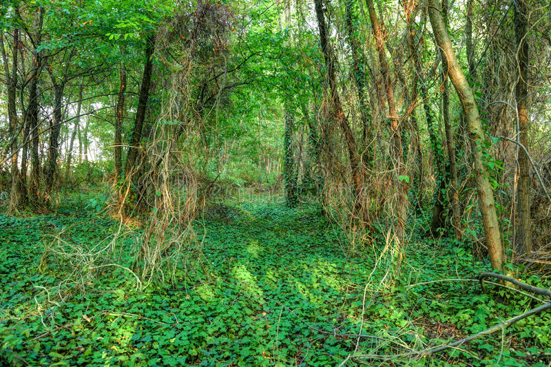 Download Green forest stock image. Image of environment, beautiful - 26520561