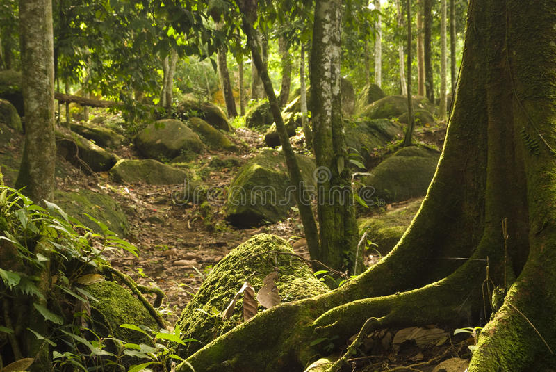 Download Green Forest Stock Images - Image: 26940304