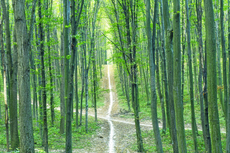 Download Green forest stock photo. Image of environment, scene - 28801206