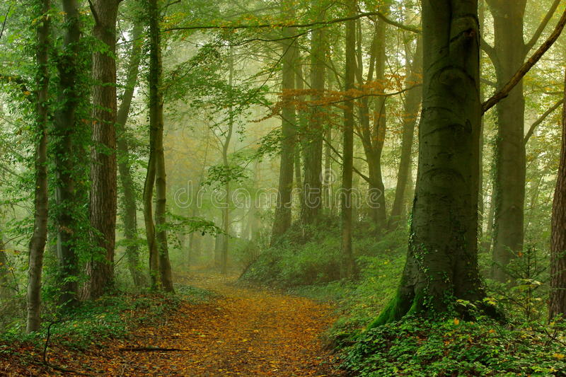 Green forest in the beginning of autumn stock photography