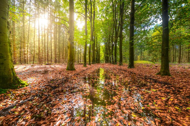 Green Forest With Body of Water Covered With Brown Dried Leaves royalty free stock images