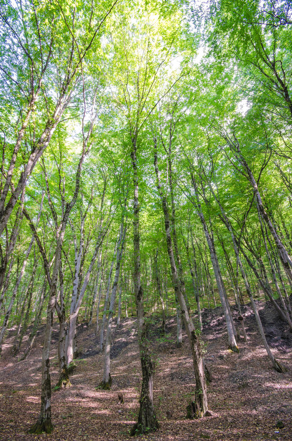 Download Green Forest In Bright  Day Stock Image - Image: 26373533