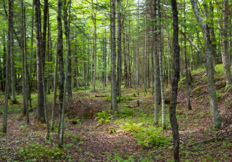 restoring americas forests essay We protect, restore, and sustain forests to mitigate climate change and help species adapt.