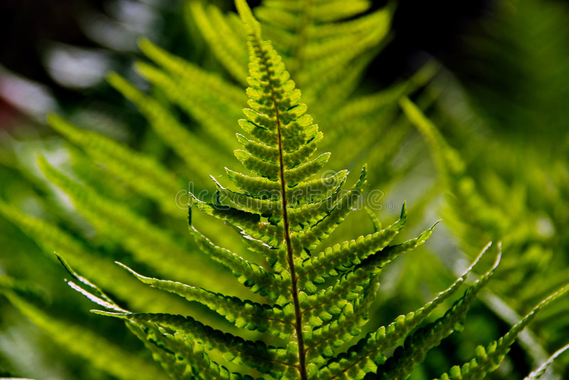 Download Green Forest Fern stock image. Image of many, fern, forest - 5506569