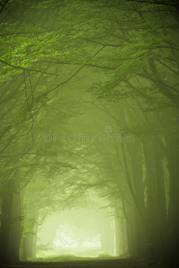 Green forest in the fog royalty free stock photos