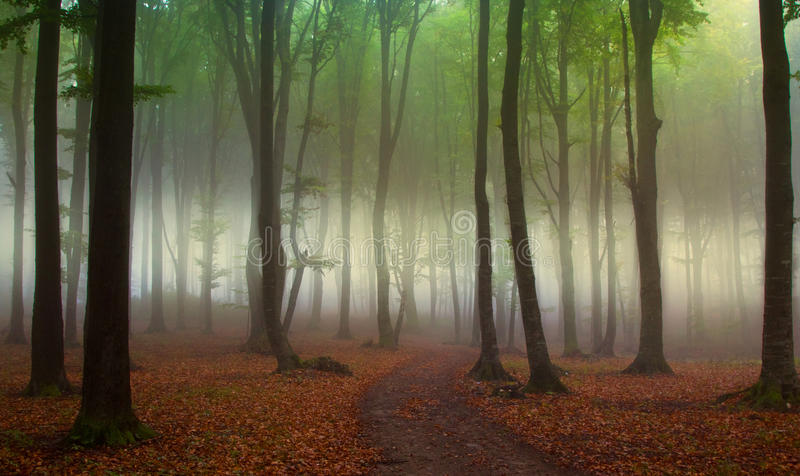 Green forest with fog during autumn royalty free stock photo