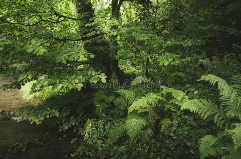 Green forest with lush vegetation stock photo
