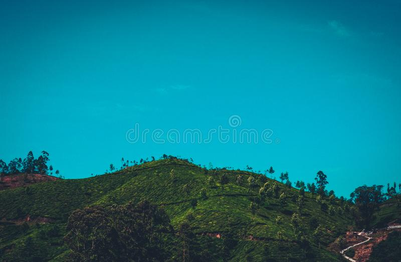 Green Forest Mountain Under Clear Sky royalty free stock image