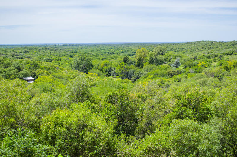 Green forest panoramic view royalty free stock photography