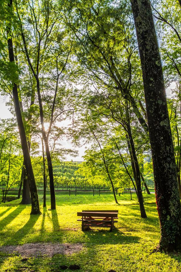 Green forest with path stock images