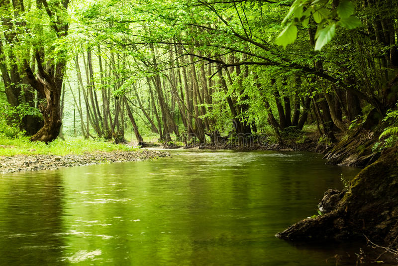 Green forest and river. With reflection stock image