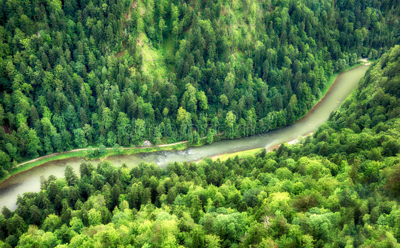 Green forest with river, aerial view as background.  stock photography