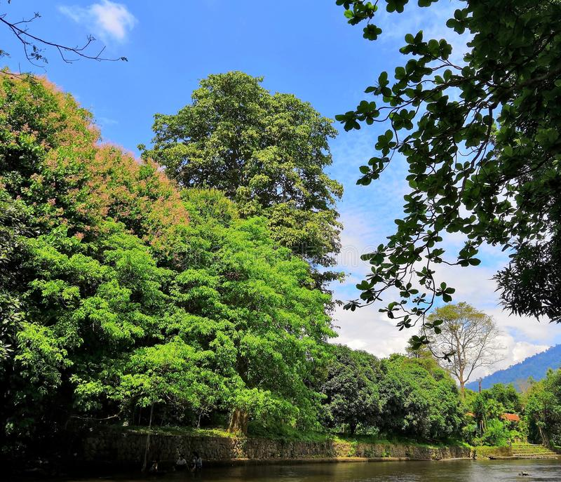 Green Forest & River. Green Forest near river and blue royalty free stock images