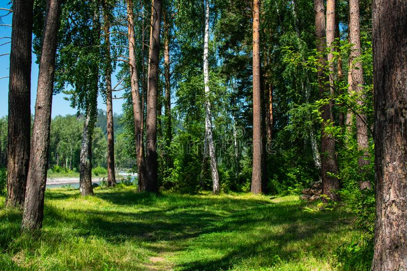Green forest by the river. Path and green forest by the river stock photo