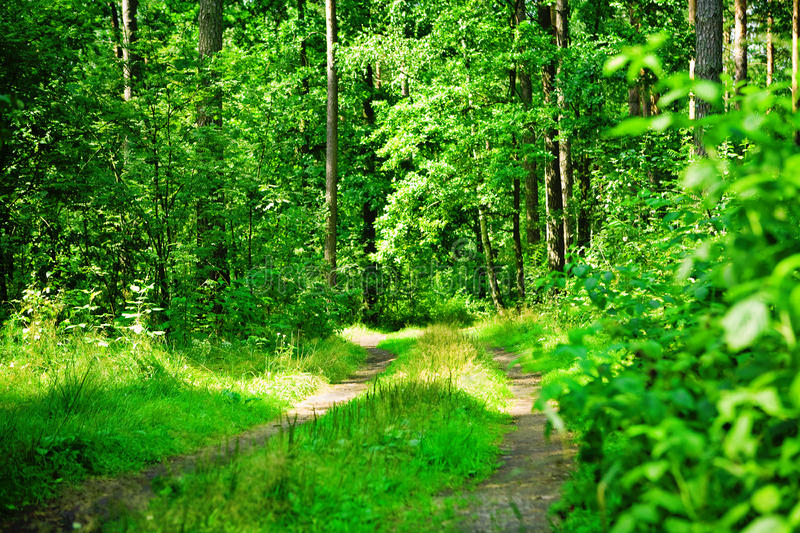 Download Green Forest Road Royalty Free Stock Image - Image: 17350236