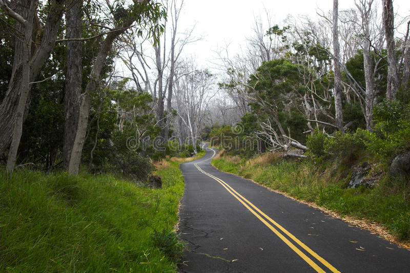 Download Green forest and road stock photo. Image of scenic, drive - 18798176
