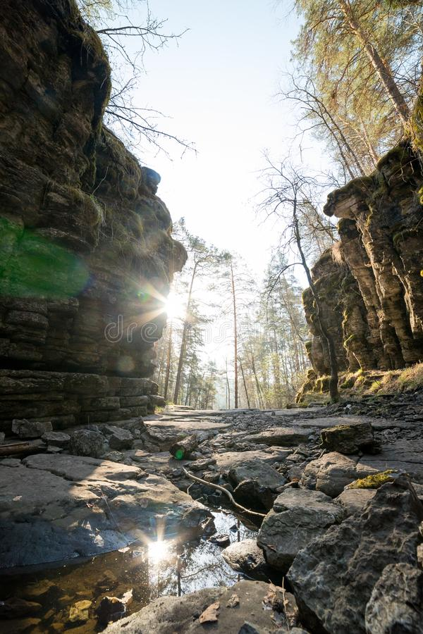 A green forest with rocky path with greenery and moss around. A bright sun coming throw stock photography