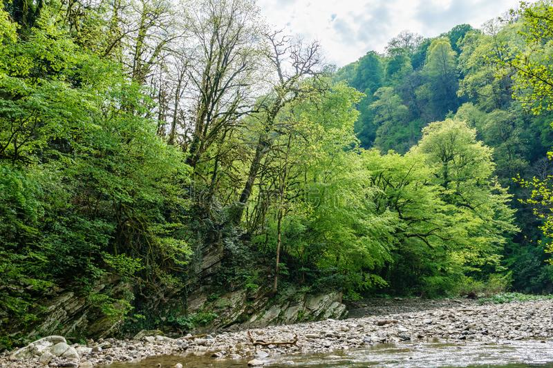 Green forest on the rocky shore of a mountain river stock photography