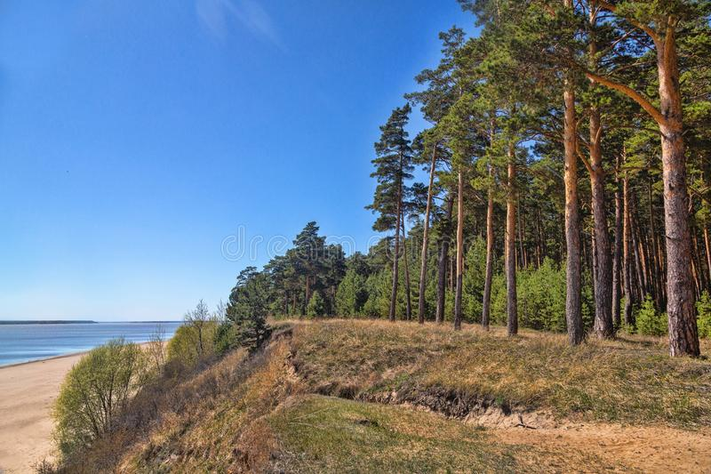 Green forest on the shore of the lake, sand on the shore stock photo