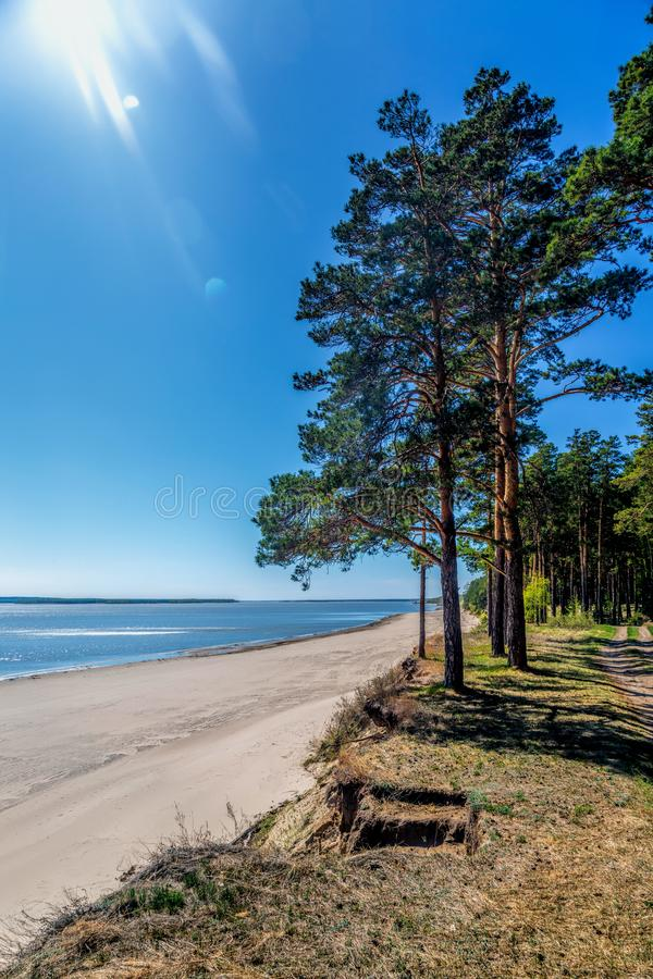 Green forest on the shore of the lake, sand on the shore. Summer stock images